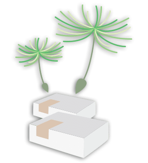 Détoxination Graines germées Box bien-être